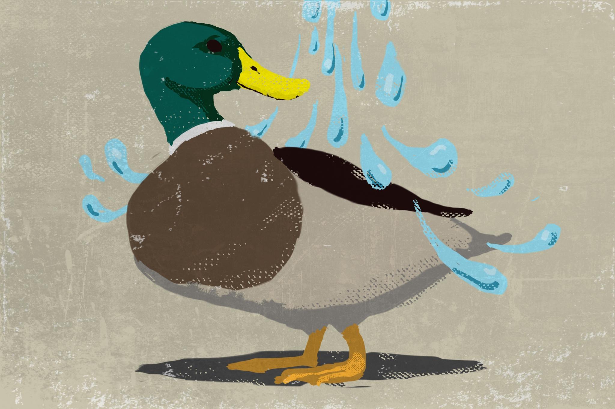 ducks_back